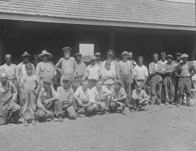 Peach Picking Crew, Capitol Fruit Farm: August 27, 1924