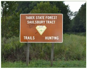 Taber State Forest