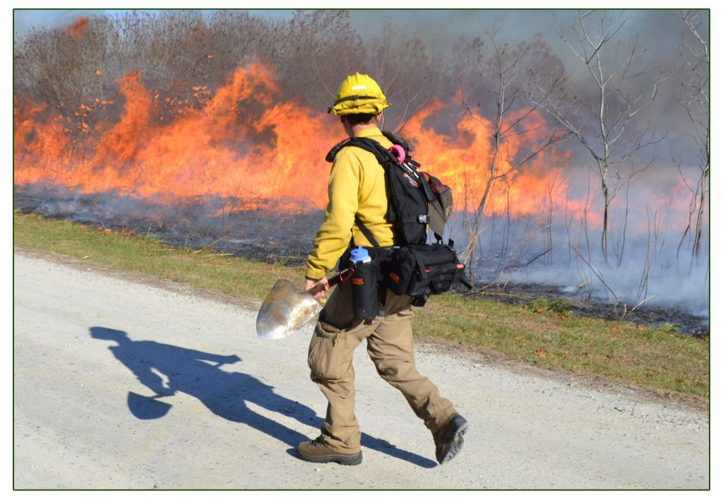 Delaware Wildfire Program