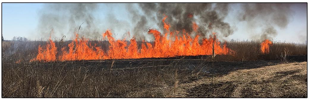 Wildfire in a field