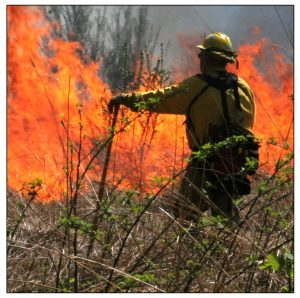 Wildland firefighter at field fire