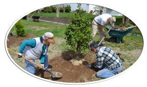 urban tree planting Rehoboth Beach