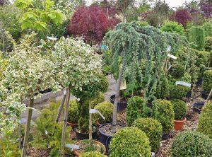 ornamental trees and shrubs at a nursery