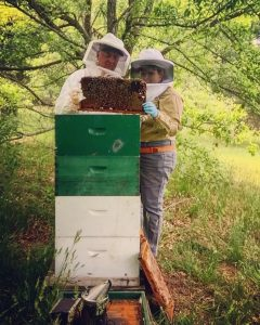 State apiarist and inspector checking bee colony for mites