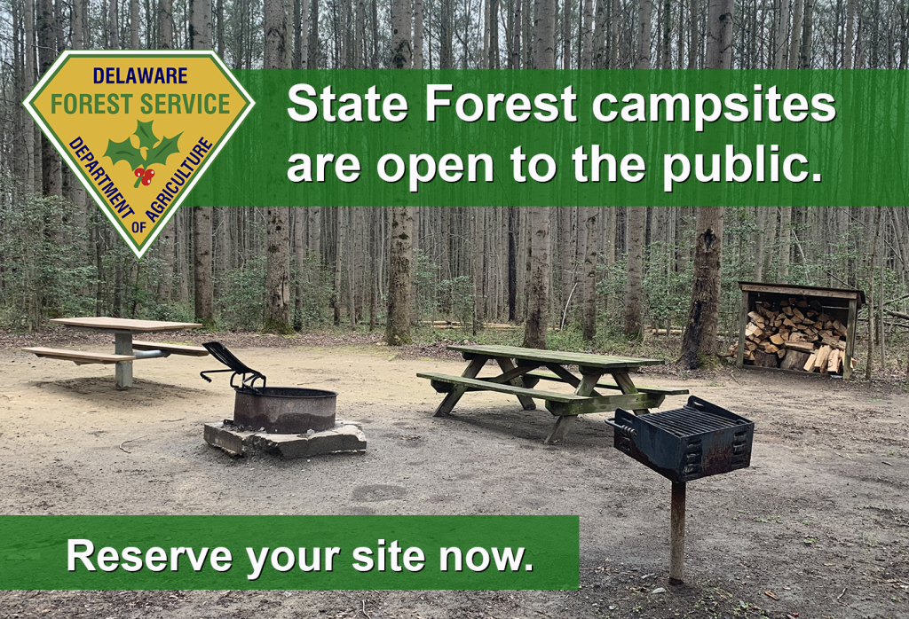 State Forest camping now open